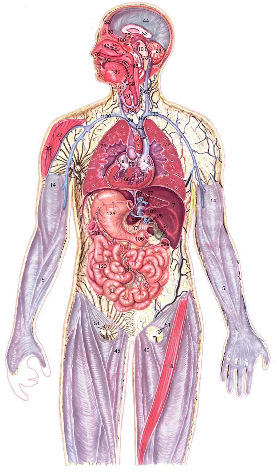 организм человека является для паразита средой обитания